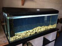 """48"""" aquarium"""