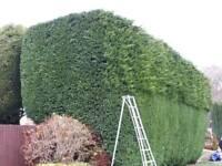 C.p tree&garden services