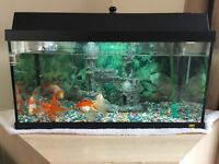 Fish, Fish Tank and Cabinet