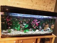 Boyu 4ft Fish Tank for Sale