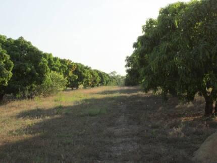 Mango Farm 2 tiles with  over 73+ Acres
