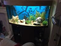 48inch fish tank and stand