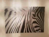 Large black and white zebra picture for sale!