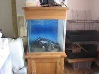 solid ok fish tank