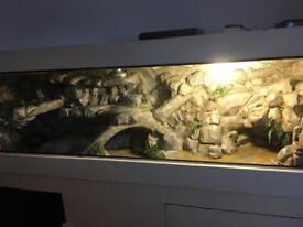 6 foot lizard tank