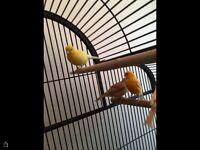 Boarder canary