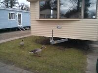 Haggerston Castle Luxury caravan for hire. Ask for dates