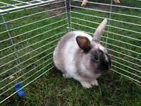 2 x Rabbits 2 x hutches for sale