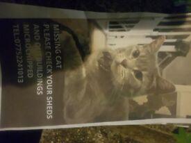 Missing cat sliver strips