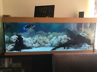 Aquarium: Jewel Rio 400 Aquarium excellent condition, everything you need included