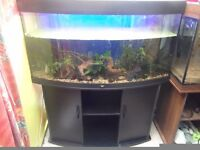 Juwel Vision 260 litre Bow front fish tank and stand Aquarium in black