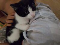 Cute kitten (£20)