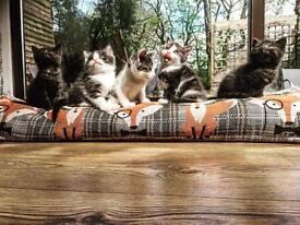 4 Beautiful Kittens (2 left)