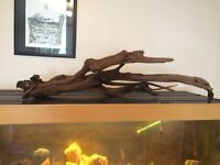 Large bogwood for fish tank
