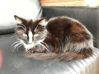 Loving cat needs re-homing