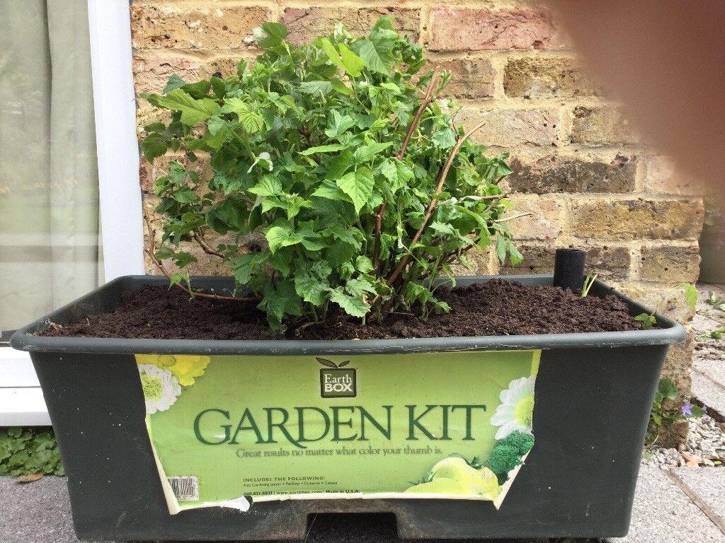Vegetable Flower Grow Planter On Castor Wheels In Ascot