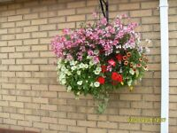 beautiful hanging baskets, wicker baskets and cones, ready filled pots