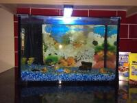 Fish Tank with tropical fish fully set up