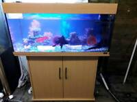 JEWEL RIO 180 LITRE AQUARIUM IN BEECH WITH CABINET