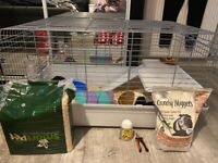 Two 8 month old guinea pigs with large cage and accessories