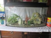 Bow fronted fish tank and accessories