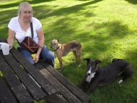 DOG/PET CARER NEW MILTON (NON-AGENCY-PRIVATE INDIVIDUAL CARE).
