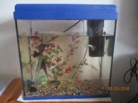 20 litre fish tank and accesories