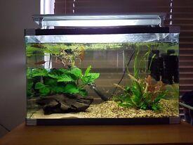Aquarium Aqua One 2ft / 60 litrs,stunning with light , heater , filter , gravel and java fern plant