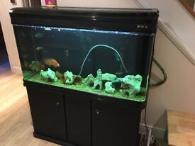 Boyu 300l tank plus fish