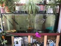 7ft fish tank for sale with fish