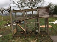 Chicken coop/Avery and 6 chickens