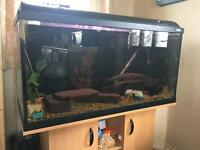 Fluval 200L fish tank and Stand