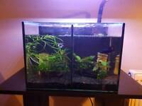 Aqua One Betta Duo and stand