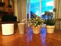 2 Artificial Ikea plants and 4 pots