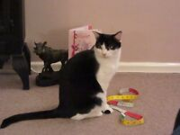B&W Female Cat missing from Worcester Road, Ipswich on 16th January, 2017