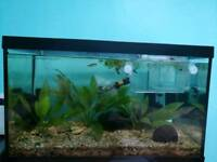 70 litre Fish tank with plants, heater and filter. Everything you need to start up
