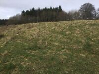 Field available to rent Ashkirk, Selkirk