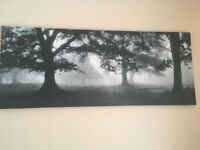 Canvas with trees in excellent condition!