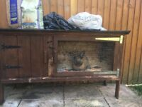 Lovely Brown Rabbit only just 4 months old comes with hutch, food and bedding. so friendly&cuddly