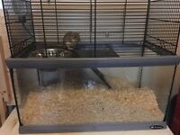 Two male gerbils free to good home including set up and food