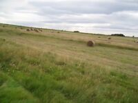 hay bales round for sale near towlaw from £10