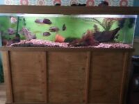 Fishtank 6ft complete setup exept fish and wood