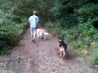 Dog Holiday Home walking and Pet sitting Service & Boarding Service in Norwich