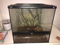 Viv for geckos