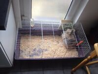 Small lion rabbit and cage and all accesories fo sale