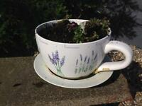 Large cup and saucer garden planter