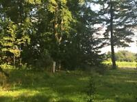 This is Paradise - Lot 2 Ronson Rd., Mountain ON - Price Reduced
