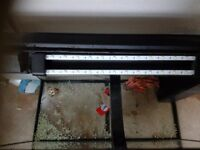Juwel large fish tank 110L