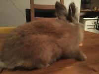 Friendly rabbit free to good home