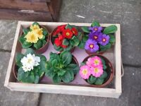 Pallet trays, boxes and planters